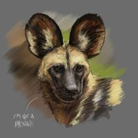 Licaone (african wild dog) by Entropician