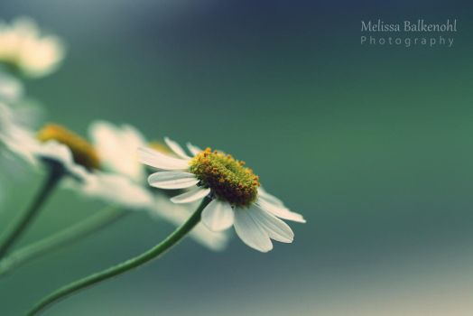 Life in Colour~ by MelissaBalkenohl