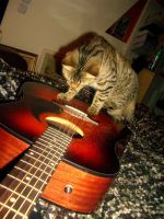 Cat on the Guitar by DharmaInt