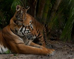 Mother and Cub_4202 by JJHOW