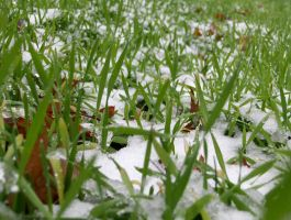 Snow-covered Grass by filmmaster123