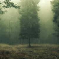 Veiled in a Dream by Oer-Wout