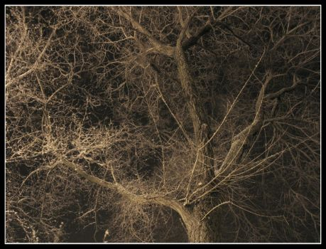 Night Trees by brichards700