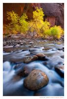 Cottonwood Alcove by Ian-Plant