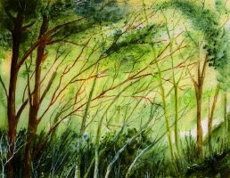 Forest Light by aragonia