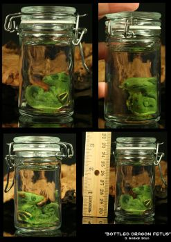 Preserved Dragon Fetus by CatharsisJB