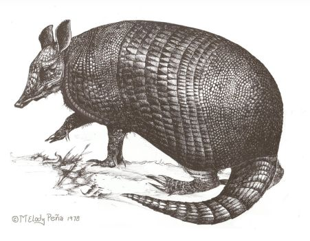 Armadillo Ink by Reptangle