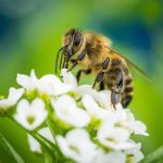 Bee with little Flowers by Akxiv