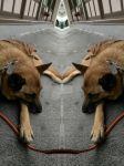 A dog's mirrored soul by GorgeousWreck