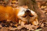 FqPcuMUk8vw by Dark-Arctic-Fox