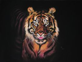 26. Bengal Tiger by Mrfour1