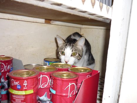 All Youz food Belongs to Meh by Catofhope
