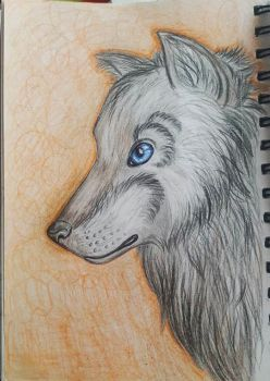 Traditional Wolf Drawing by DarkyDestiny