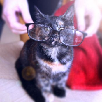 professor kitty by FacetiousKellyAna