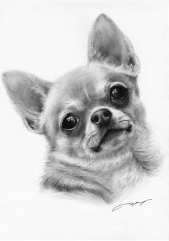 Commissioned Chihuahua painting by petpaintings