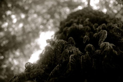 Moss In Black And White by LePhotagDeAbnormal