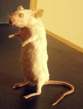 taxidermy mouse by pandasnacks