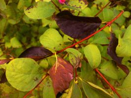 Black leafs on red stalk by Dreamplayer