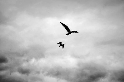 fly with me by auraa09