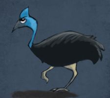 Cassowary by UnusualHero