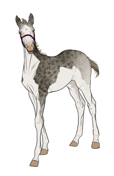 White Out x Valhalla Foal Auction *SOLD* by angry-horse-for-life