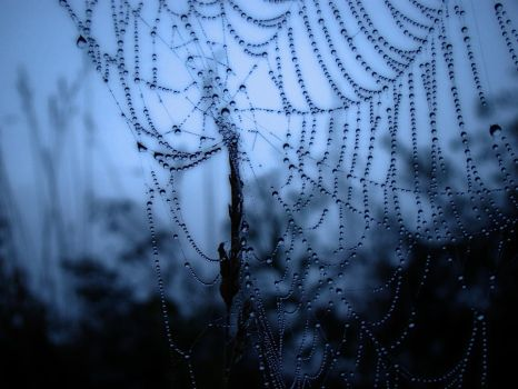 Spider Web by jmarie1210
