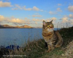 Koktebel's Green cat by Mari-Ghostly
