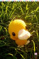 Photo - Just Psyduck in the grass