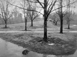 Trees In The Rain (2) by dsimple