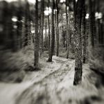 Lost in forest I by etchepare