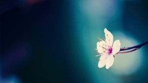 Spring flowers background II by quansie