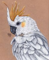 Carlitos the Citron-Crested Cockatoo by KristynJanelle