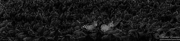 Standing Out by MorkelErasmus