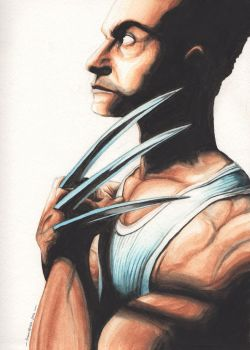 Wolverine watercolor2 by DrawingGuyND