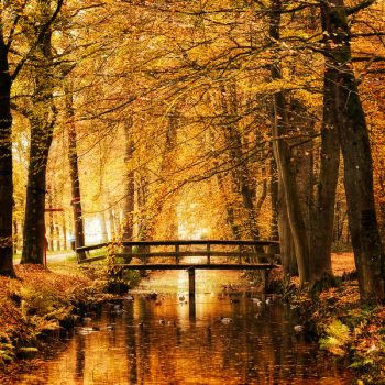 Amber Autumn by Oer-Wout