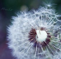 Two hundred thousand wishes by Alessia-Izzo