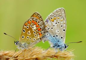 mating by efeline