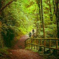 way to the forest by Perena