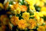 Tiny Yellow Flowers by bloomingvinedesign