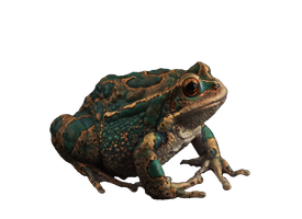 Frog by Moonglowlilly