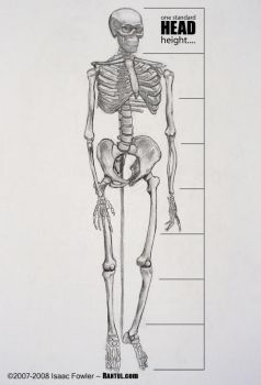 Human Proportions by Rantul