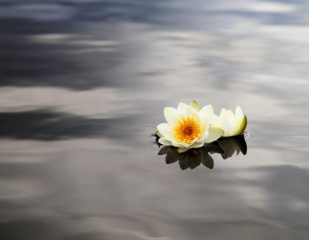 Water lily flower by KariLiimatainen