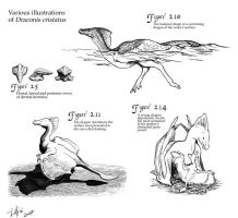 Plan Illustrations by Luthrai