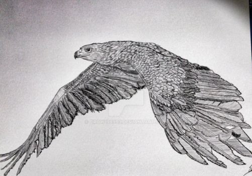 falcon finished by crow198993