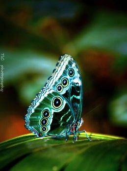 Beautiful butterfly by TlCphotography730