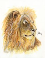 Lion by LukeFielding