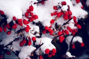 First Snow by memo--ry