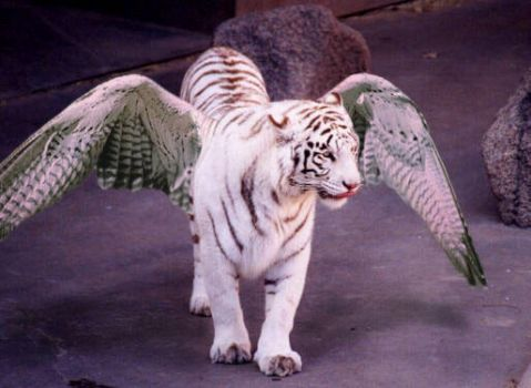 flying tiger by Taen