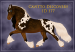 Cavitto Discovery 177 by ThatDenver