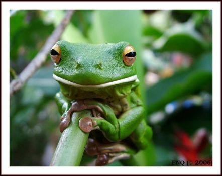 Frog On A Stick by FNQ